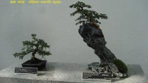montreal-garden-bonsai