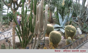 montreal-garden-cactii